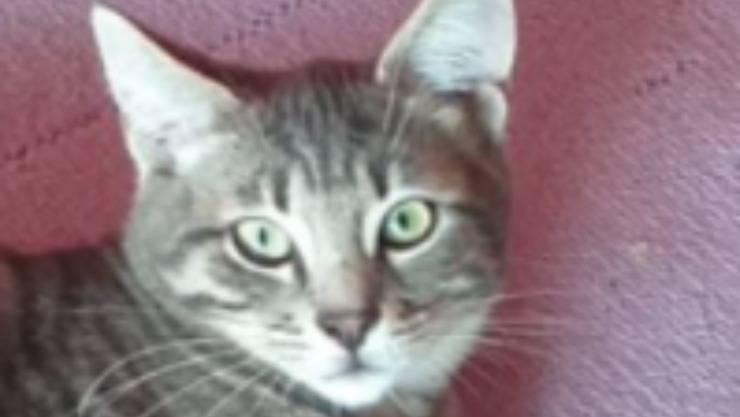 Elvin, micio dagli occhi verdi