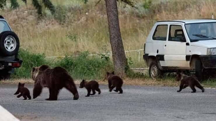 Famiglia orsi (Screen Instagram)