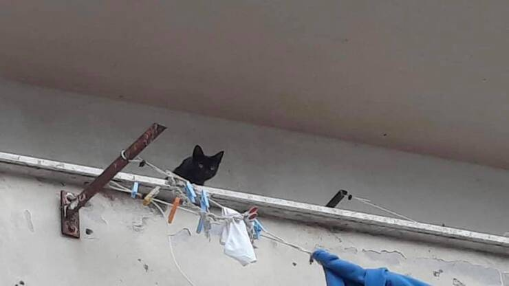 Gattino affacciato al balcone dell'appartamento sotto sequestro (Screen Facebook)