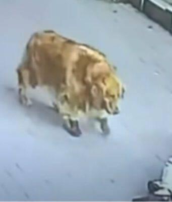 Gatto cade su uomo e arriva il cane con le scarpe