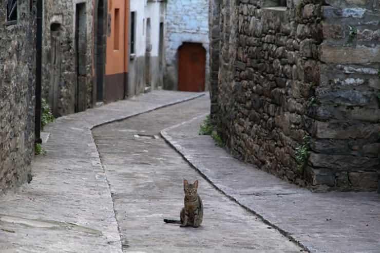 Gatto in un vicolo (Pixabay)