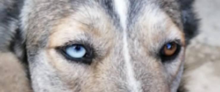 Gli occhi bicolor di Maya