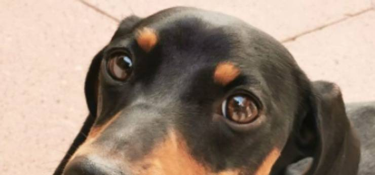 Gli occhi dolci di Sanya