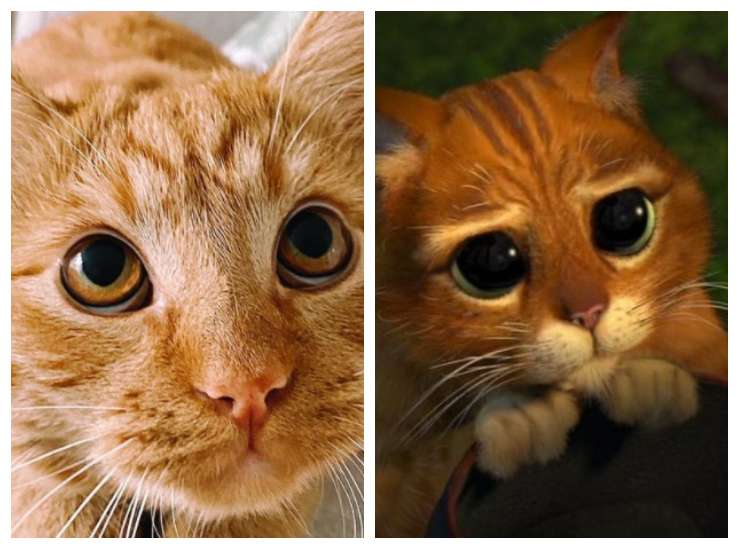 I due gatti uguali