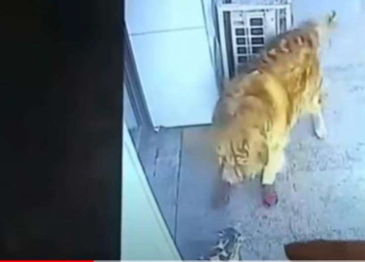 Il cane ed il gatto a confronto