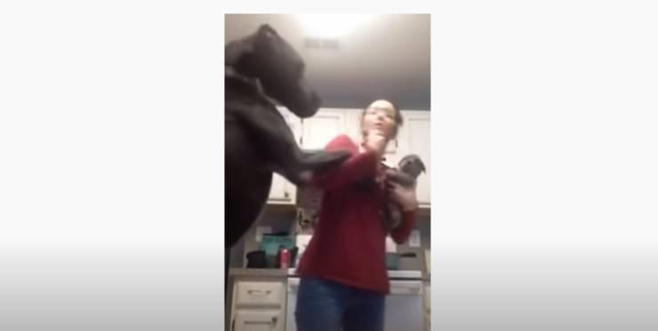Il cane salta addosso alla padrona
