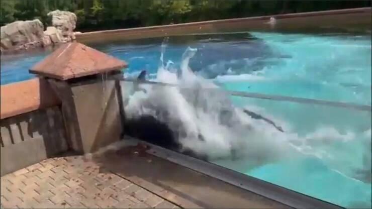 Kiska che sbatte sulla vasca ripetutamente (Screen video)