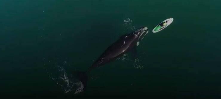La balena che nuota intorno alla pagaia (Screen video Youtube)