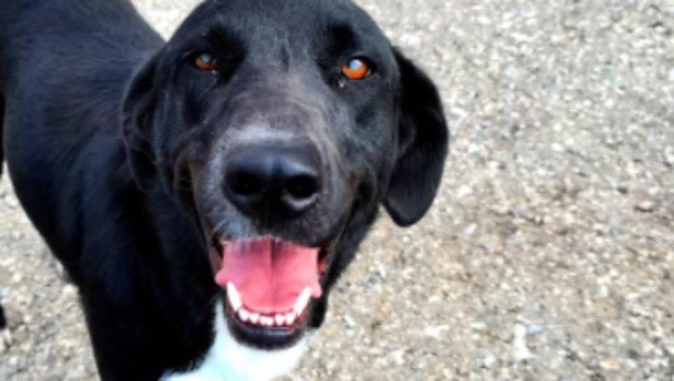 La cagnolina dagli occhi speciali