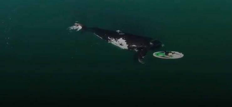 Le meravigliose immagini della balena (Screen video Youtube)