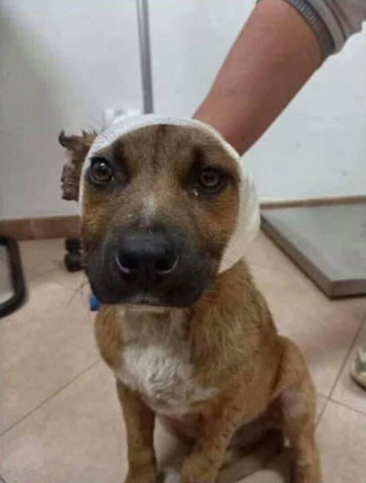 Leone dal veterinario (Screen Facebook)