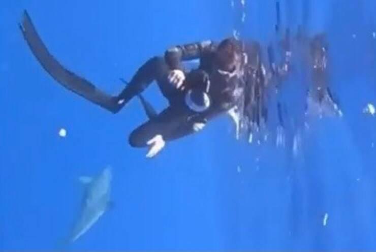 L'immersione meravigliosa con il delfino coraggioso (Screen video)