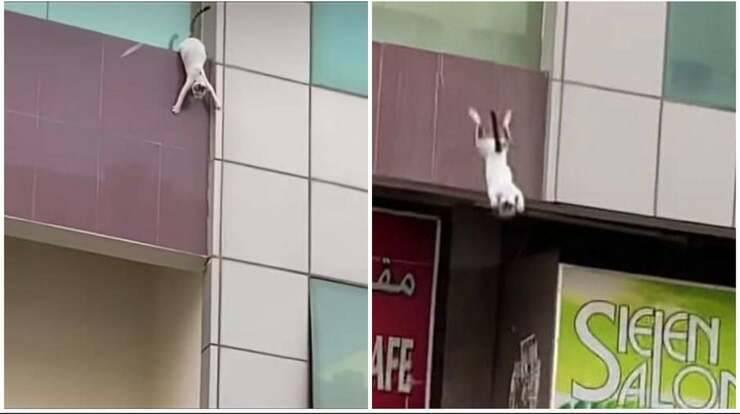 Micia si getta dal balcone (Screen video)