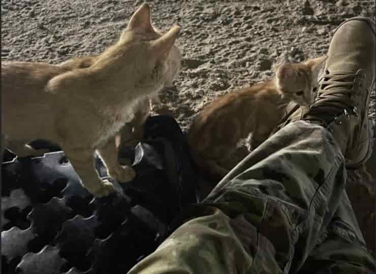Micini vivono insieme ai militari (Screen Facebook)