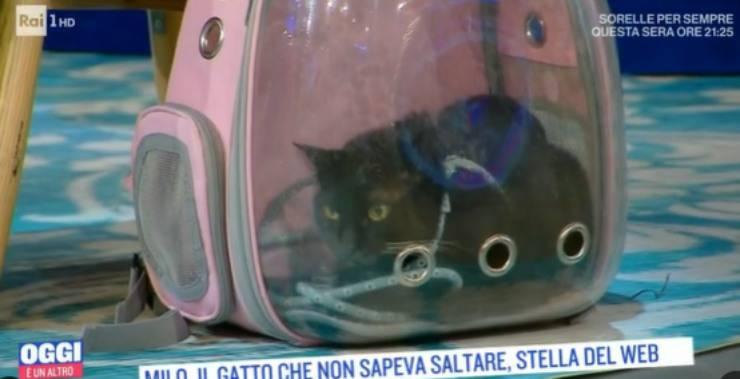 Milo rinchiuso nel trasportino