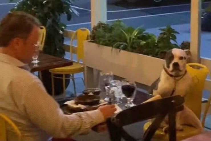 Padrone e cane a cena insieme (Screen video)