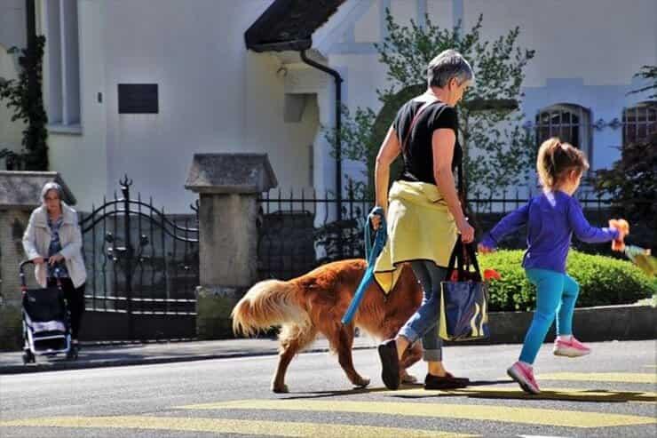 Passeggiata con il cane (Pixabay)