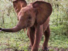 Sunyei, elefantina tornata al rifugio