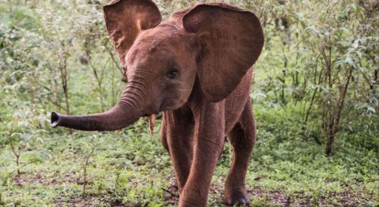 Un cucciolo di elefante