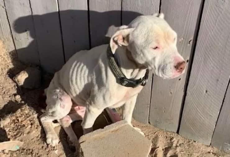 Uno dei cuccioli salvati dall'abitazione dell'uomo (Screen video)