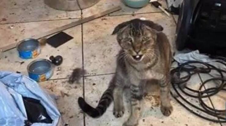 Uno dei gatti maltrattati dalla donna (Screen Facebook)