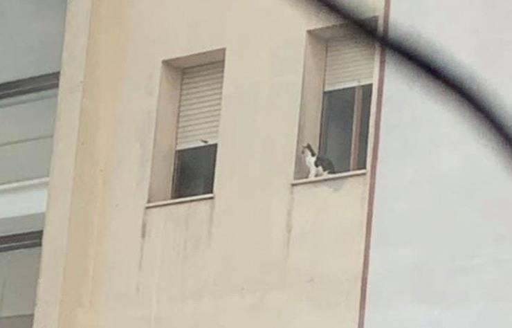 Uno dei gattini in trappola nell'appartamento sotto sequestro (Screen Facebook)