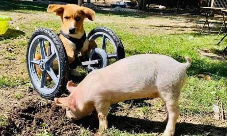 Wilma e Winston mentre passano il loro tempo insieme (Screen Facebook)