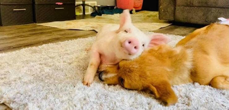 Wilma e Winston (Screen Facebook)
