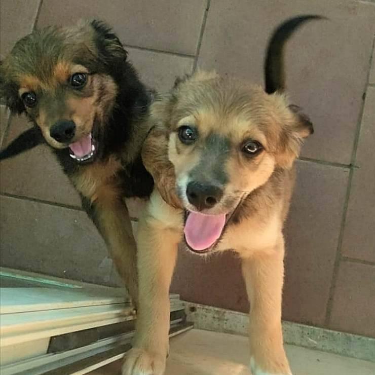 Zen Tofu Cuccioli Cane Cercano Casa