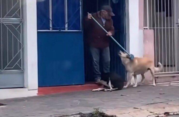 Zio Marco coccola i due cani (Screen video)