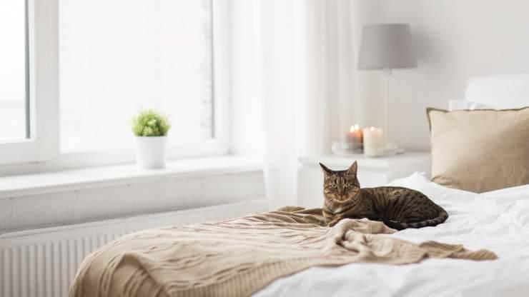 al gatto non piacciono le coperte
