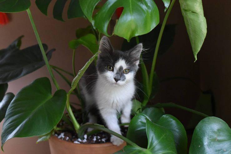 Il felino e la terra dei vasi