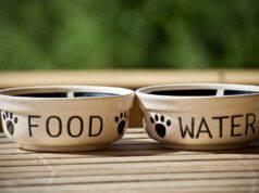 alimentazione gatto giavanese