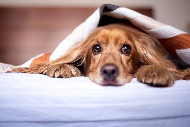 Polmonite da inalazione nel cane