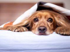 Il cane e la polmonite da aspirazione