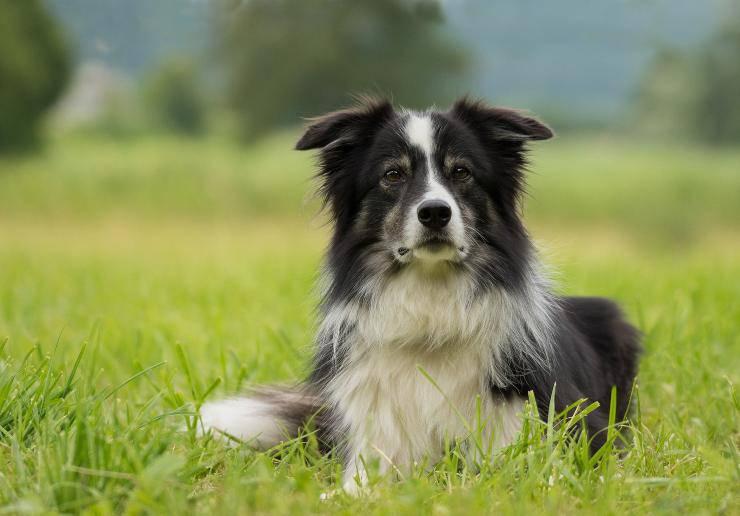 Le razze di cani che fanno bene alla salute