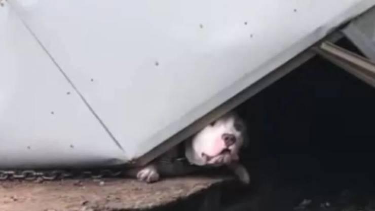 Il cane rimasto intrappolato (foto Facebook)