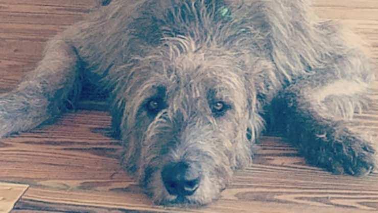 cane in primo piano (Foto Instagram)