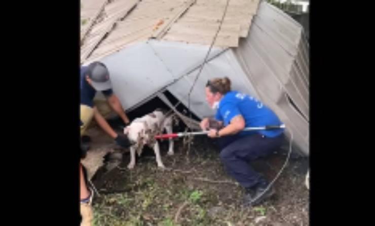 Il salvataggio del cucciolo (Foto Facebook)