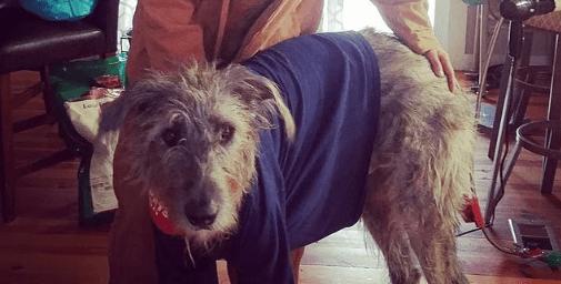 cane malinconico (Foto Instagram)