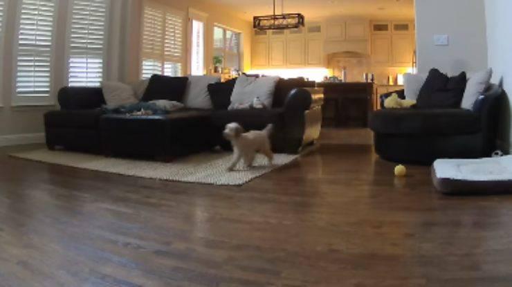 Il cane alla ricerca del padrone (Foto video)