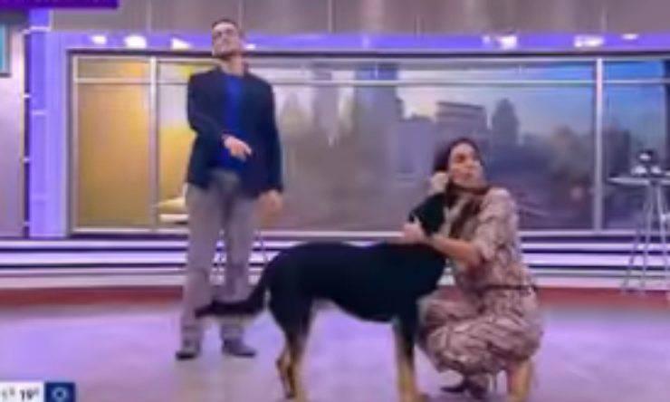 Il cane abbraccia la conduttrice (Foto video)