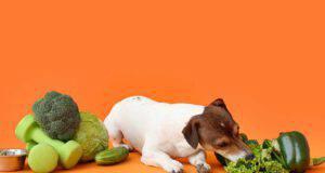 Cane può mangiare cavolo riccio