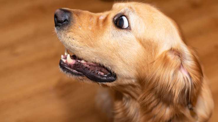 cani che hanno più paura