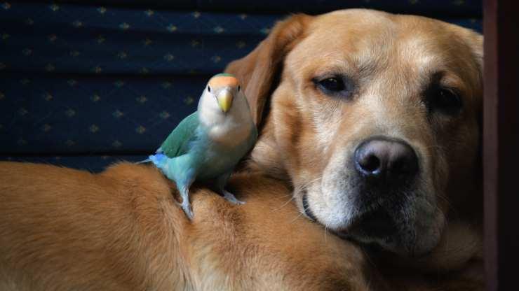 cani che vanno d accordo con i pappagalli