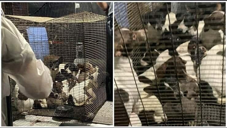 26 cani abbandonati in gabbie metalliche (Foto Facebook)