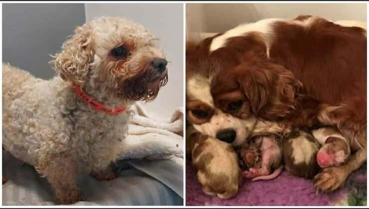 200 cani salvati in condizioni pessime da un allevamento illegale (Foto Facebook)