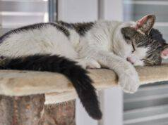 Il gatto e la panleucopenia