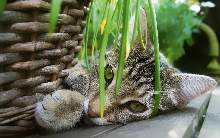 Il gatto rovescia la terra dai vasi