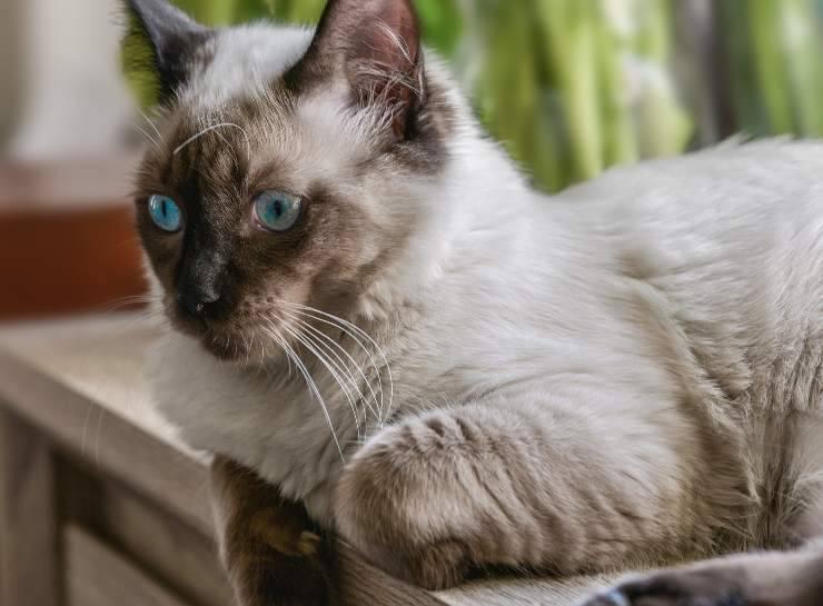 Gattini che rischiano di essere rapiti